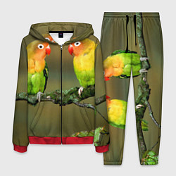 Костюм мужской Два попугая цвета 3D-красный — фото 1